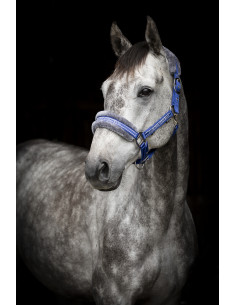 Headcollar Horse Unique