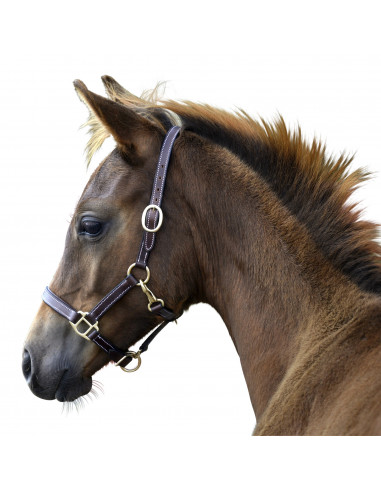 Foal halter Lippo Selected